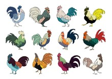 Set Of Colourful Rooster On White