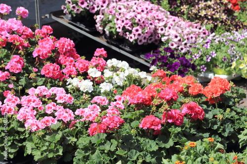 Rimedi naturali per migliorare la coltura delle piante da giardino