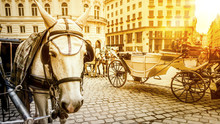 Typical Horse Carriage In Vienna Austria