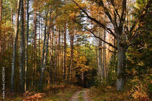 Papiers peints Foret brouillard Autumn forest