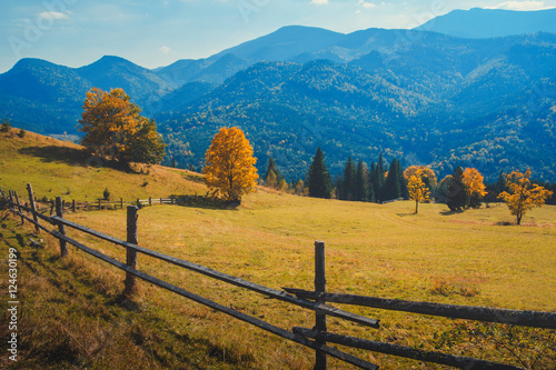 Photo Stands Lavender Autumn in the Carpathian mountains with yellow trees