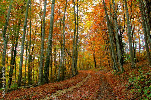 Foto op Canvas Weg in bos Couleurs d'Automne