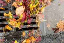 Wet Dried Leaves Cogging A Street Drain