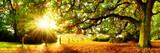 Fototapeta Na ścianę - Landschaft im Herbst, Panorama mit Wald, Wiese und Sonne