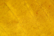 Close Up On Autumn Yellow Leaf Texture
