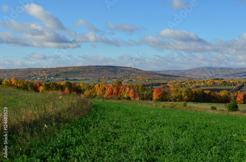 Fotografia, Obraz  Fall Foliage on the hillside of upstate New York