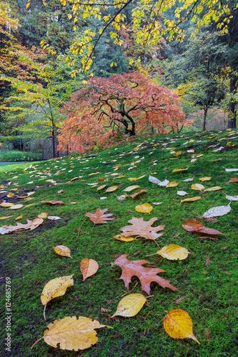 Foto op Canvas Zen Japanese Maple Tree on a Green Mossy Slope