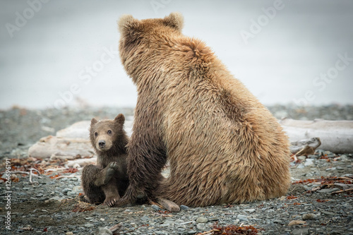 Fotografie, Obraz  Alaskan Grizzly sow and cub so cute on beach.