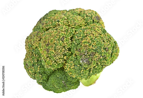 Old rotten broccoli on a white background
