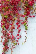 Texture, Pattern, Background. Autumn. Autumn. Golden Autumn. Wil