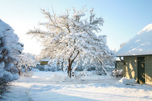 House And Garden Trees Covered In Snow On A Cold, Sunny Winters Day With Clear, Blue, Azure Skies