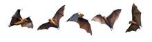 Bats Flying On White Background
