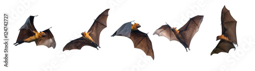Fotografering Bats flying on white background