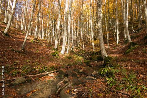 Luce del mattina filtra nelle foreste Casentinesi