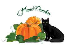Pumpkin And Black Cat. Black Green-eyed Cat And A Beautiful Ripe Pumpkin. Halloween Design