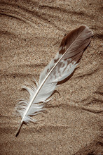 Piuma Di Gabbiano Sulla Spiaggia