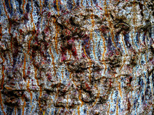 Bark Of Olive Trees In Brown A...