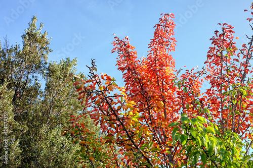 Fotografie, Obraz Autumnal Foliage In Etna National Park, Sicily