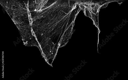Obraz na plátně cobweb or spider web isolated on black background