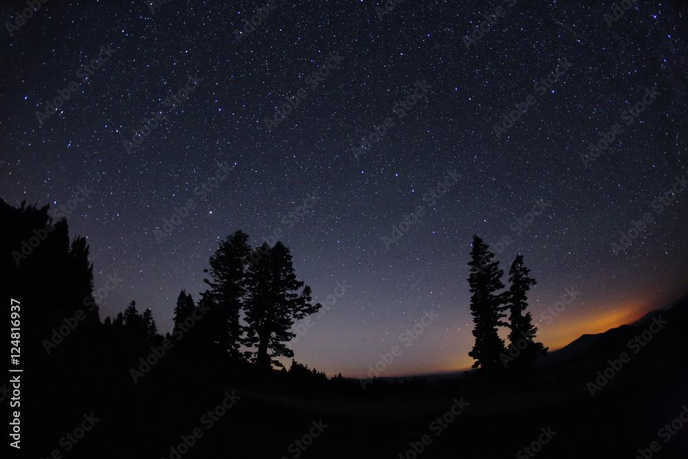 Fototapety, obrazy: trees dusk n stars