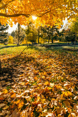 Fall tree leafs on grass background