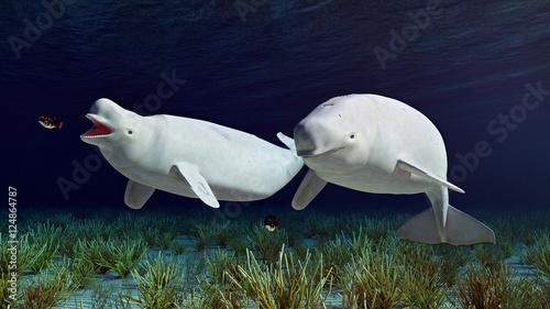 Fotografie, Tablou  Beluga Wale