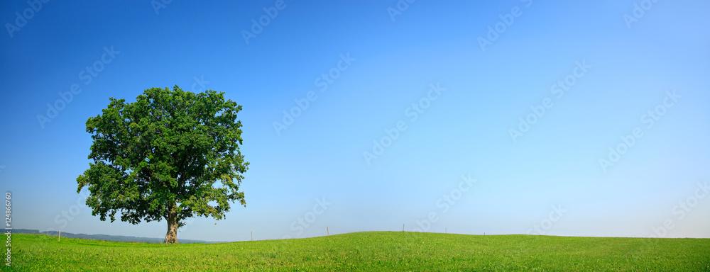 Mighty Oak Tree in Green Field, Spring Landscape under Blue Sky