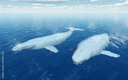 Foto Beluga Wale