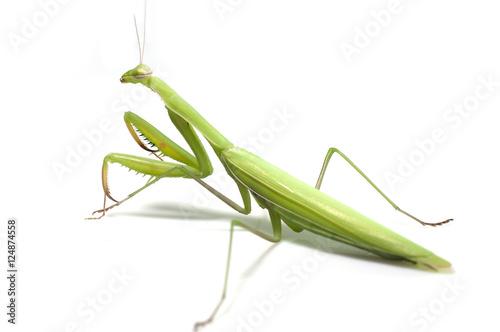 Staande foto Kameleon Mantis on white background
