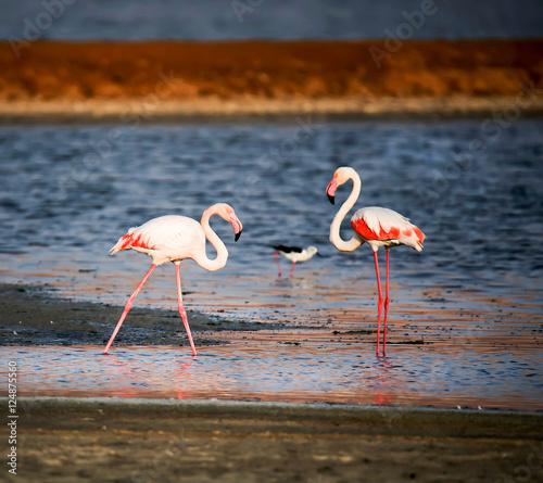 Foto op Aluminium Flamingo Two Flamingos