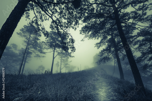 dark misty forest path in fog, Halloween concept