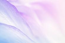 Sweet Color Flower Petals In S...