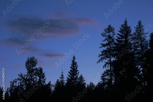 Foto op Aluminium Volle maan trees n dusk sky