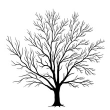 Vector Tree Silhouette Isolated On White Background