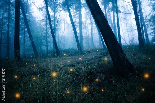 Dunkle Wälder mit Glühwürmchen