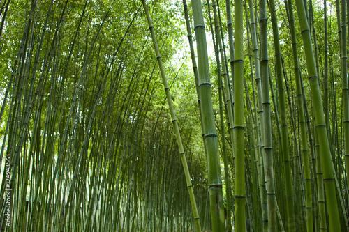 Foto op Plexiglas Bamboe Chinese bamboo park in Shanghai