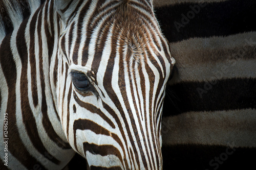 Recess Fitting Zebra