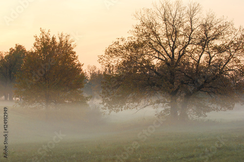 Keuken foto achterwand Bruggen Autumn fog, sunrise in the forest