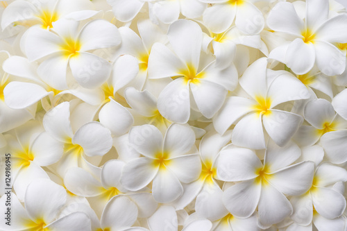 Background of Plumeria Flowers