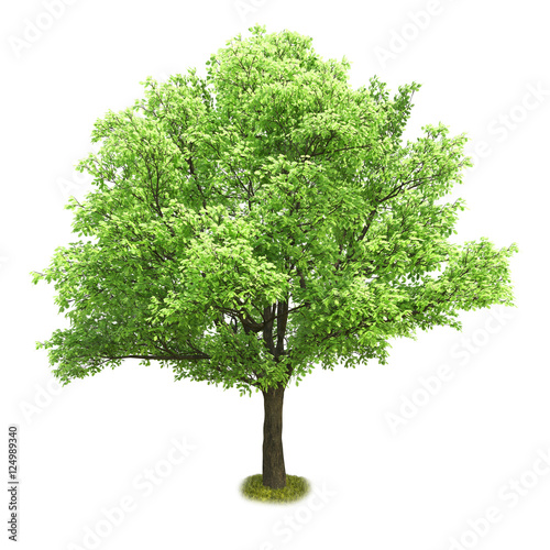 Photo  Single tree isolated on white background