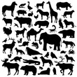Animals Suilhouette Big Set