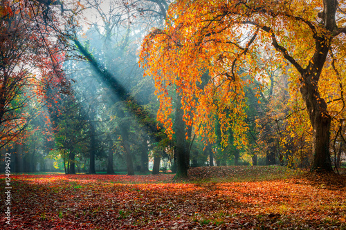 Foto op Canvas Herfst Misty autumn morning in the park