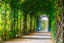 Romantic Garden Walkway Forming Agreen Tunnel Of Acacias