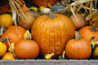 Autumn display of pumpkins, gourds and squash.