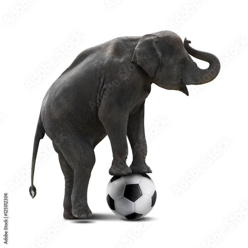 Elephant playing soccer Poster