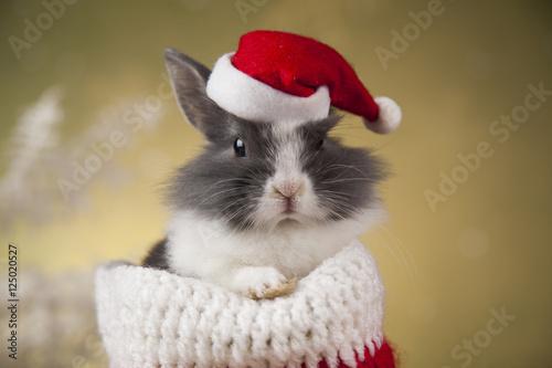 Little santa bunny on Christmas background