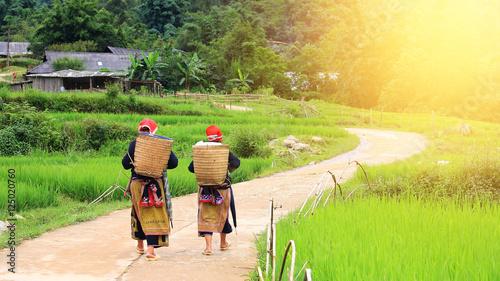 Vászonkép Red Dao Hilltribe women in Sapa