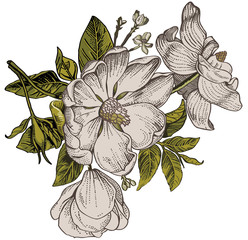 Fototapeta Vintage Beautiful white flowers dogrose, rosehip, rose, brier isolated realistic. Vintage background with blooming flowers. Drawing, engraving. Freehand. Wallpaper. Vector victorian style Illustration.