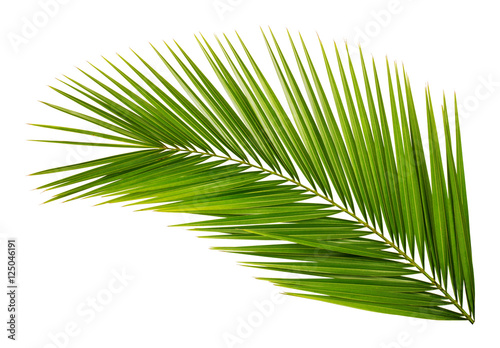 Canvas Prints Palm tree Palm