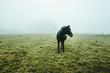 Ein Pferd auf einem Feld
